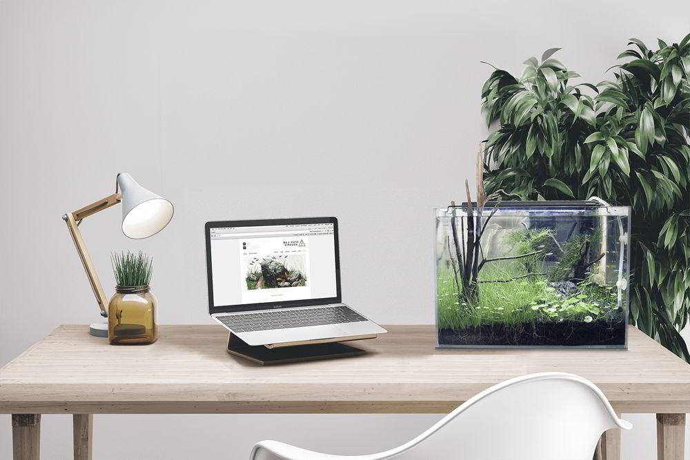 bể cá đặt trong phòng làm việc